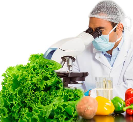 inocuidad verduras basic farm
