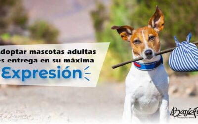 Adoptar mascotas adultas es entrega en su máxima expresión