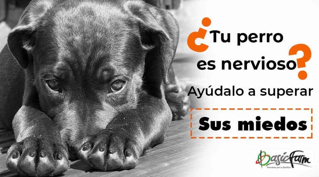 ¿Tu perro es nervioso? ¡Ayúdalo a superar sus miedos!
