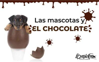 Recuerda que las mascotas y el chocolate no se deben mezclar: La teobromina es la razón.
