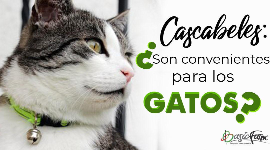 Cascabeles: ¿son convenientes para los gatos?