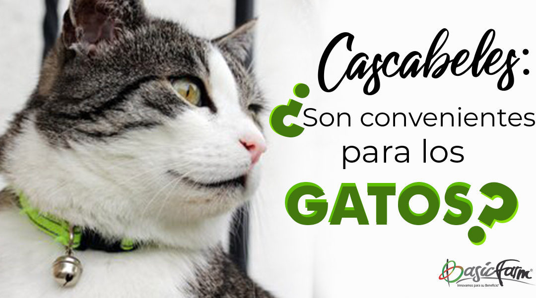cascabeles para gatos