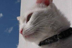cat-550504_1280-300x200