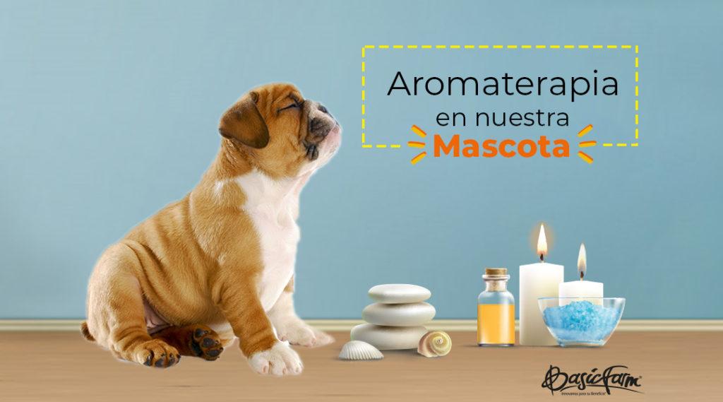 ¿Aromaterapia para mascotas? Una alternativa para su bienestar