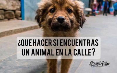 ¿Qué hacer si encuentras un animal en la calle?