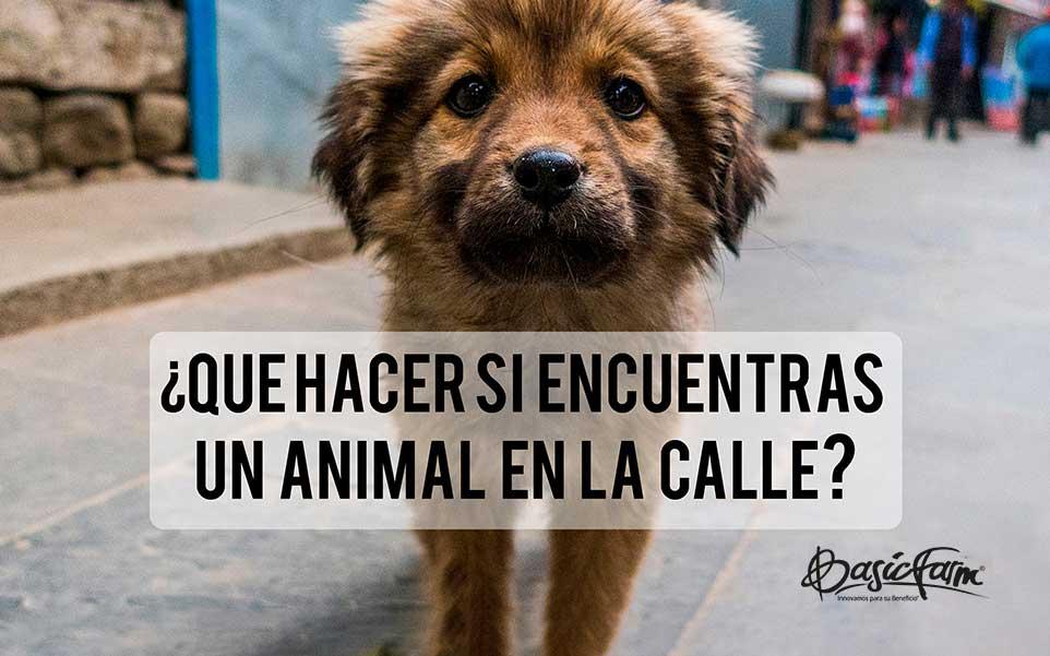 que hacer si encuentras un animal en la calle