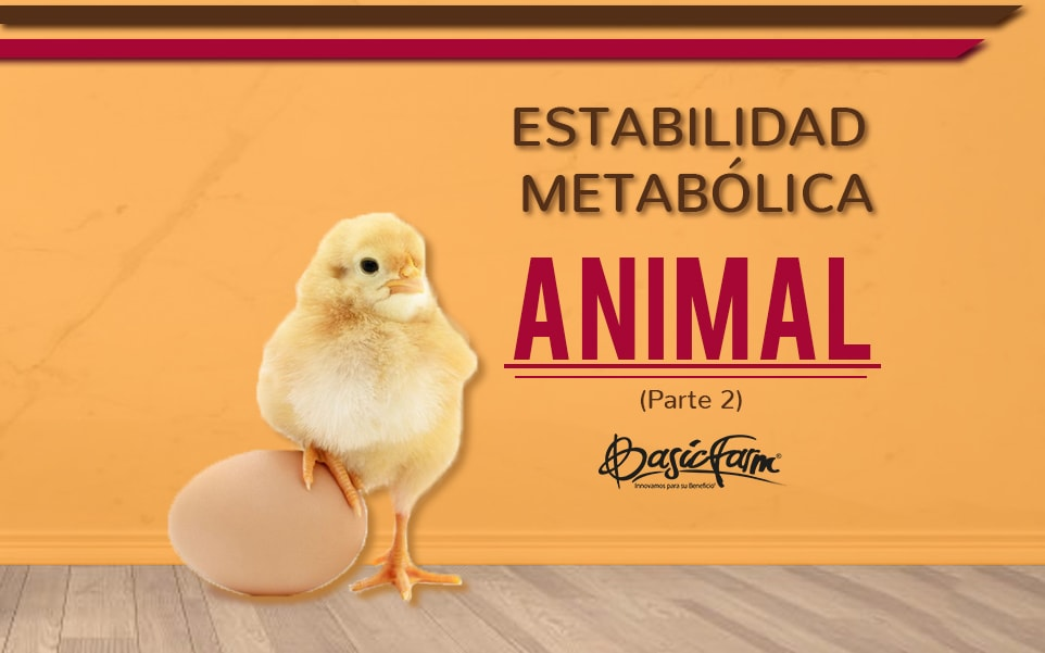 Estabilidad metabólica animal (Parte 2)