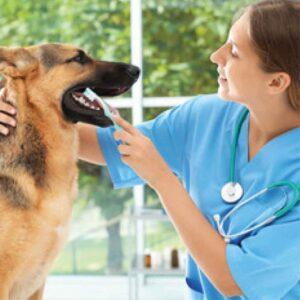 dentyfarm-cepillado-mascota