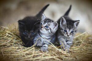 cat 3535404 1920
