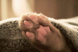 cat 3695153 1920