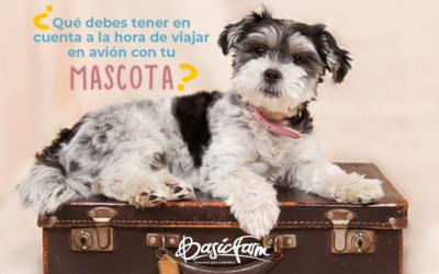 ¿Qué debes tener en cuenta a la hora de viajar en avión con tu mascota?