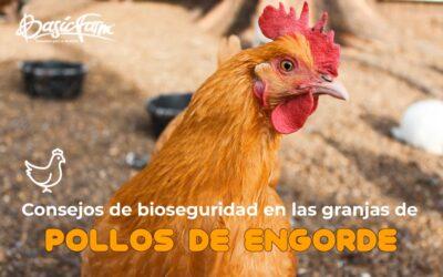 Consejos de bioseguridad en las granjas de pollos de engorde