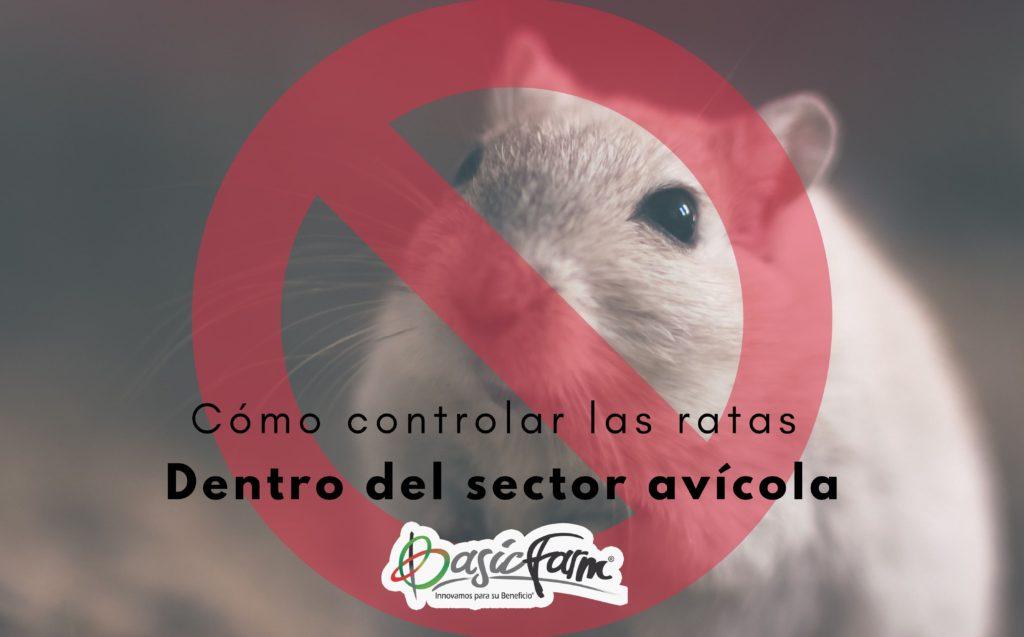 como controlar las ratas en el sector avicola