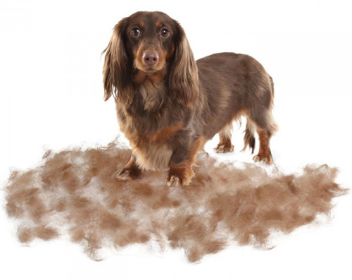 cuidar pelo de tu perro pelaje