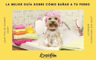 La mejor guía sobre cómo bañar a tu perro