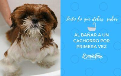 Todo lo que debes saber al bañar a un cachorro por primera vez
