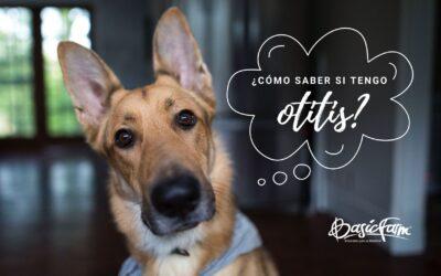 ¿Cómo saber si mi perro tiene otitis? Síntomas, causas y tratamiento