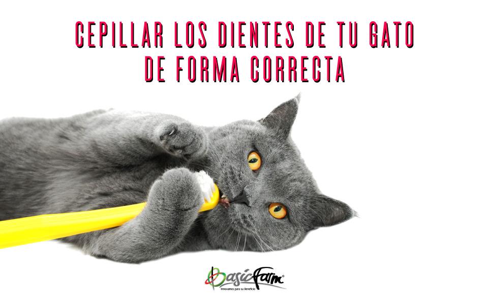 basic farm cepillar dientes gato forma correcta