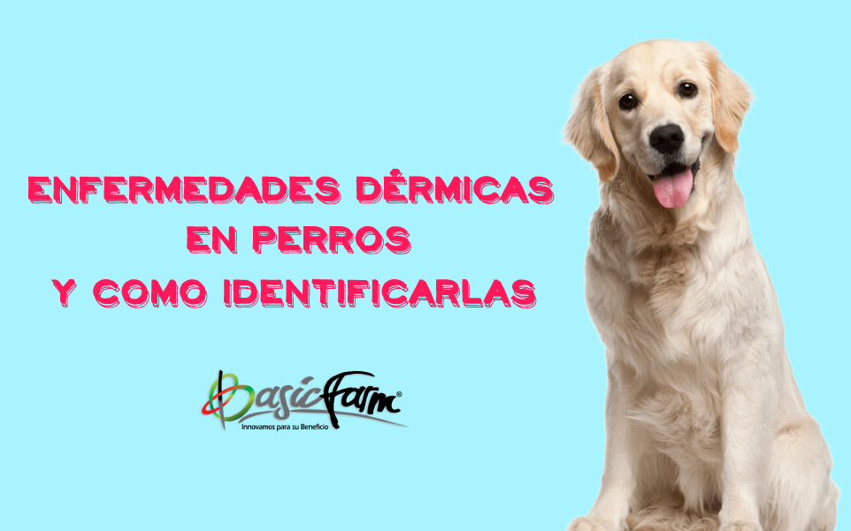enfermedades dermicas en perros