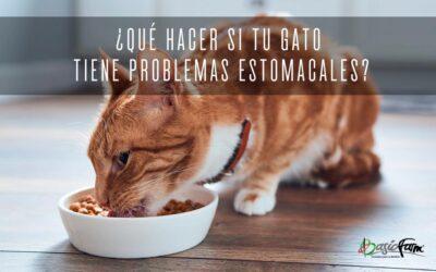 ¿Qué hacer si tu gato tiene problemas estomacales?
