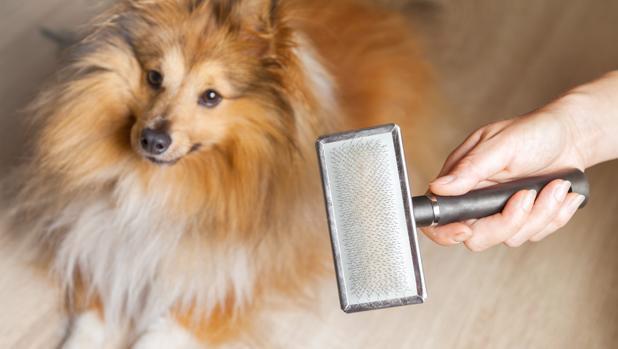 enfermedades dermicas perros pelaje perros