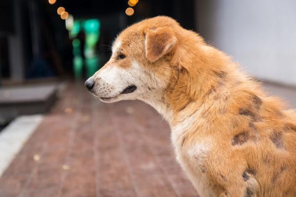 enfermedades dermicas perros tina