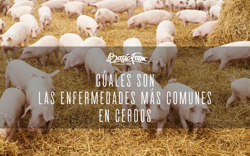basic farm enfermedades mas comunes cerdos