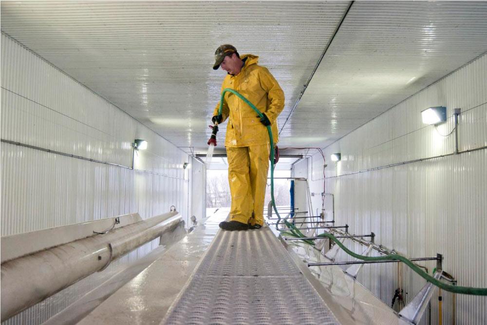 bioseguridad para granjas avicolas limpieza