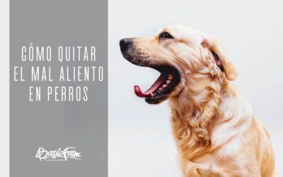 Cómo quitar el mal aliento en perros