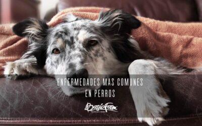 ¿Cuáles son las enfermedades más comunes en perros?