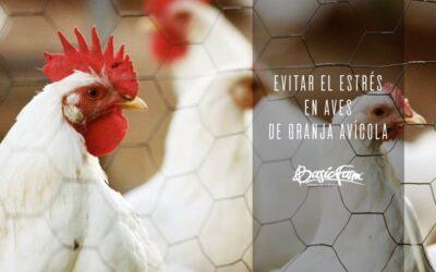 Cuidados a seguir en una granja avícola para evitar el estrés en las aves