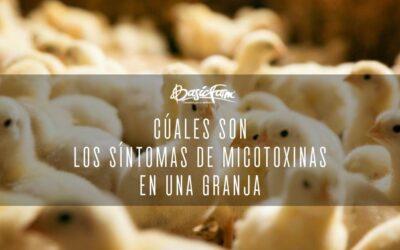 Cuáles son los síntomas de micotoxinas en una granja