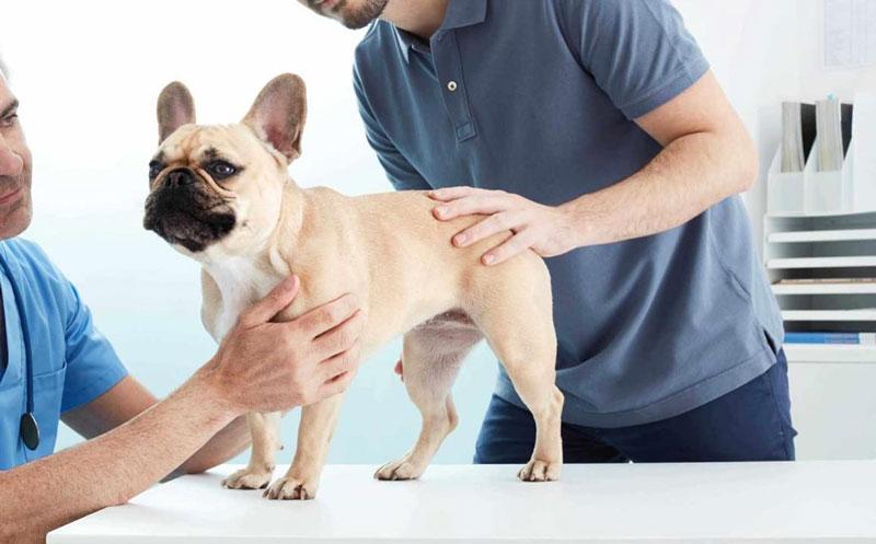 quitar mal aliento perros enfermedades renales