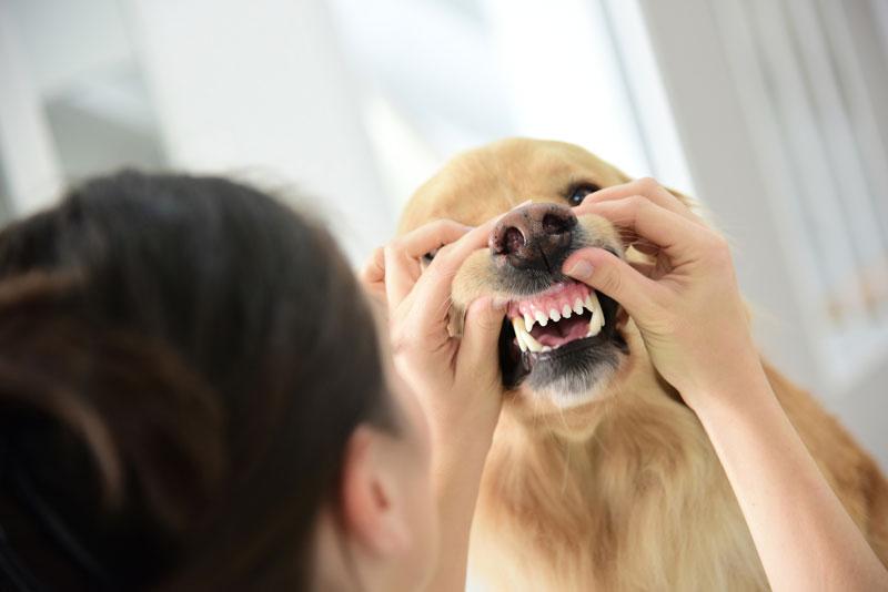 quitar mal aliento en perros higiene oral enfermedad peridontal