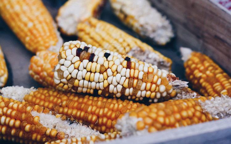 sintomas micotoxinas granjas caracteristicas