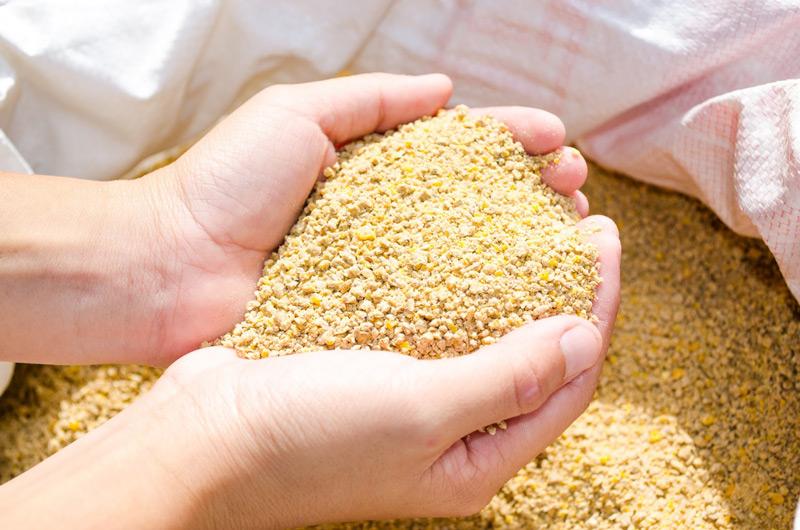 sintomas micotoxinas granjas que es