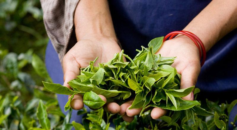 usar pesticidas forma segura aire libre