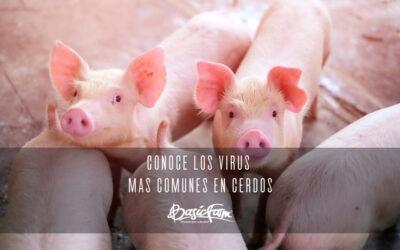 Los principales virus en cerdos que puedan afectar su salud