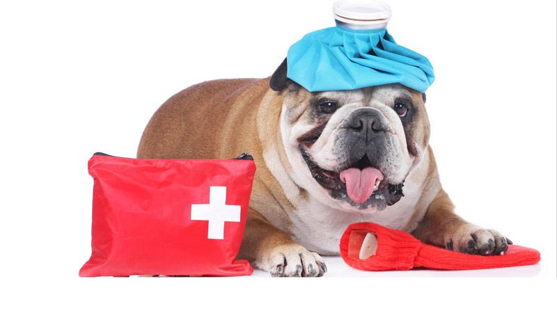 consejos primeros auxilios mascotas botiquin primeros auxilios