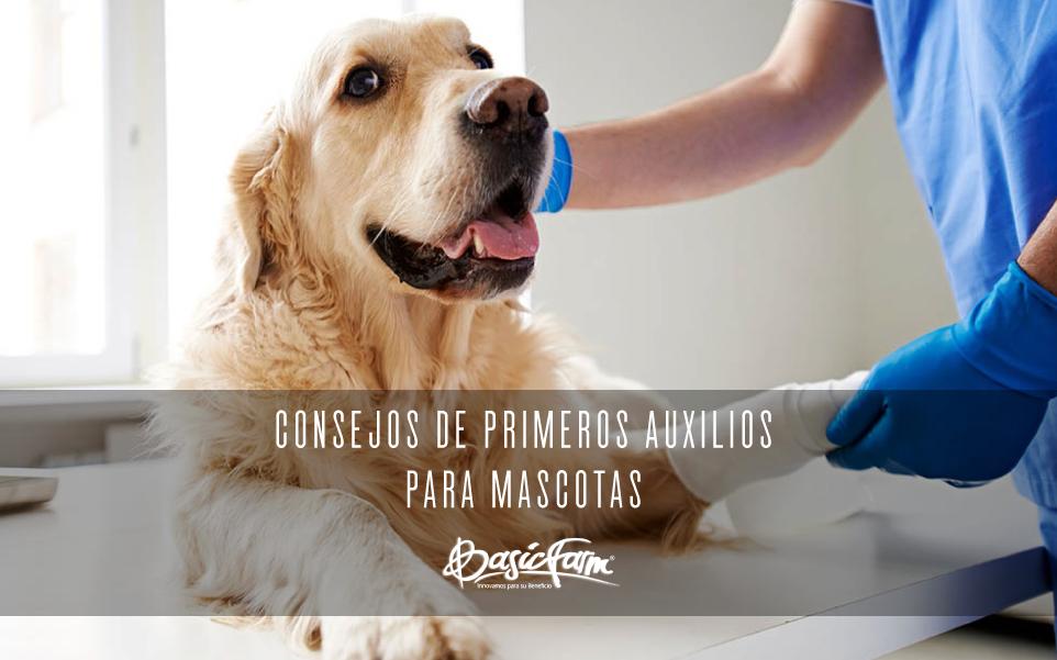 consejos de primeros auxilios para mascotas