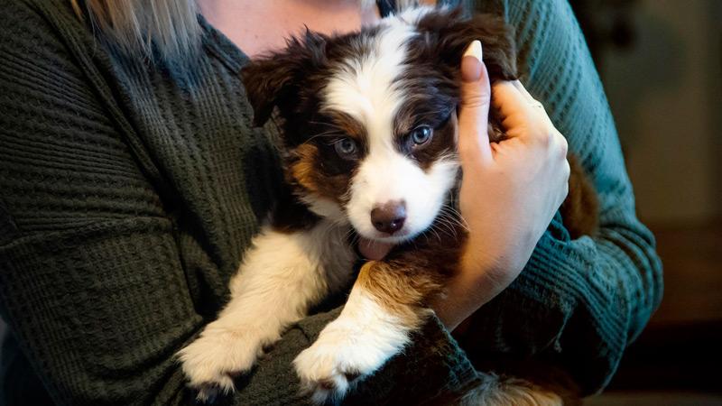 cuidar cachorro adapte nuevo hogar conociendo a la familia