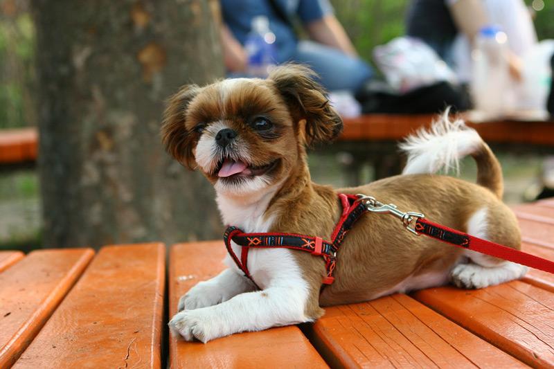 cuidar cachorro adapte nuevo hogar rutina bano