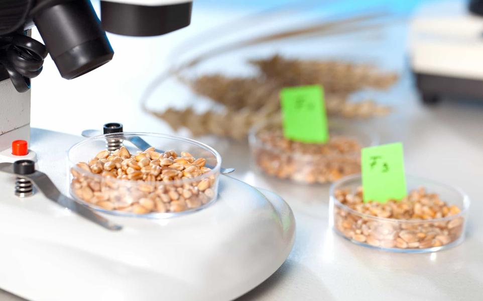 basic farm microbiologia alimentos 1