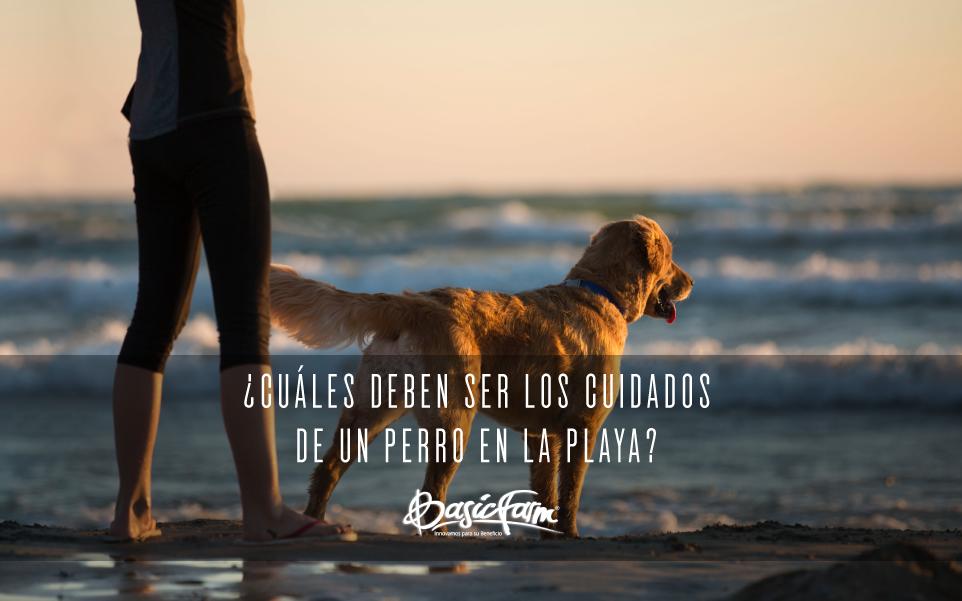 cuidados de perro en la playa 2