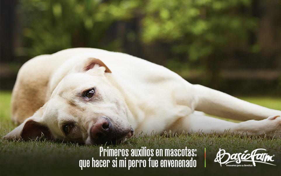 primeros auxilios mascotas que hacer si tu perro fue envenenado portada
