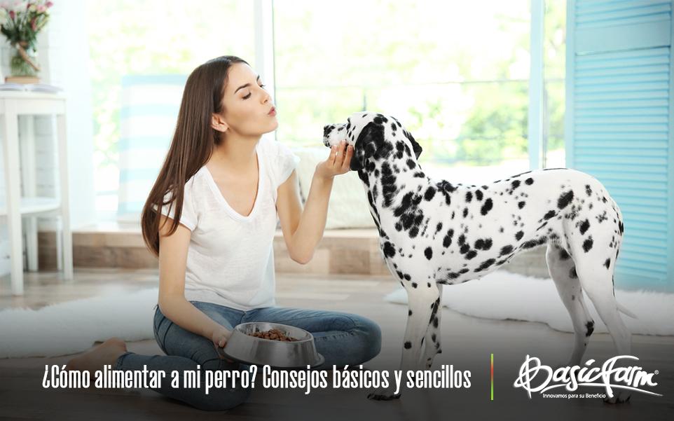como alimentar perro consejos basicos sencillos