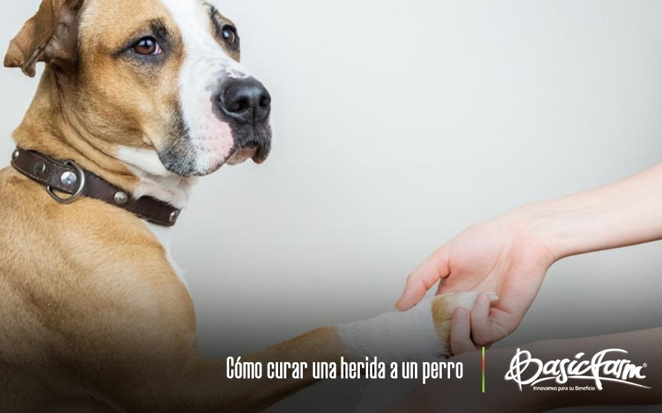 como curar las heridas de mi perro