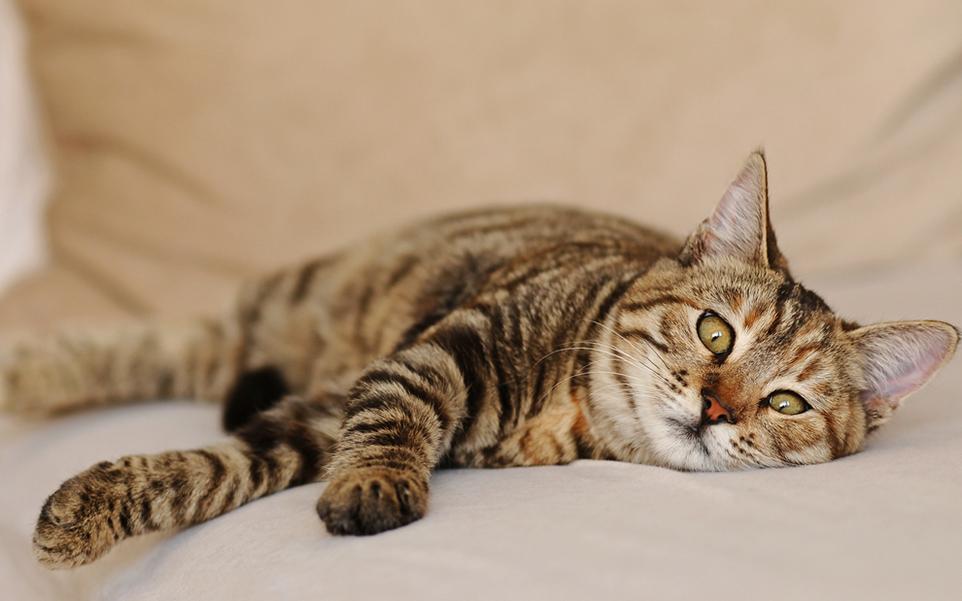 que puedes hacer gato no quiere comer