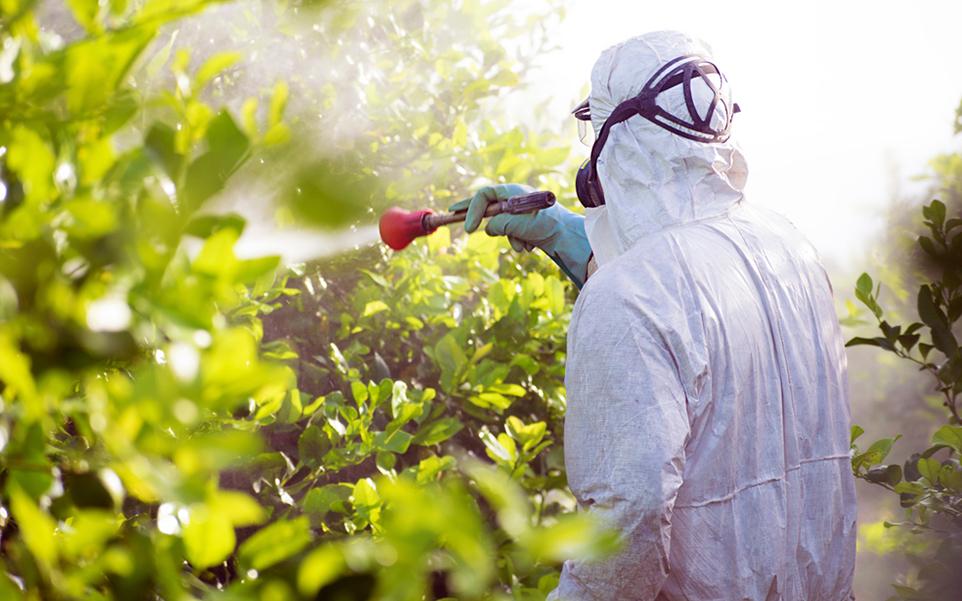 tipos plagas comunes plantas produccion alimentos