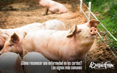 ¿Cómo reconocer una enfermedad en los cerdos? Conoce los signos más comunes
